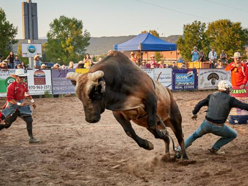 A steer at a rodeo